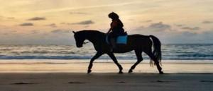 Bij Manege Duno kunt u op bosrit, strandrit of combirit op een van onze vele paarden of pony's. Ook kunt u wandelen met Shetlandpony's.